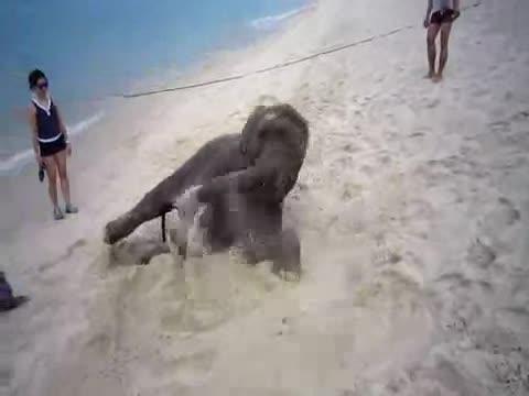 Elephant on the Beach. elephant having a goodtime on the beach.. Oh my days. I've been to this exact same beach, seen this exact same elephant.