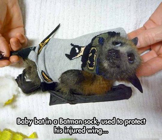 Baby Batman Bat. Baby Batman Bat isfunny.net/keep-smiling-every-day/.. I am: Bat Bat funny