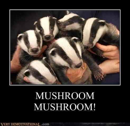 """Badger?. MUSHROOM!. MUSHROOM MUSHROOM!. """"Get away from me! Get away from me!"""" says the snake. badgers Mushrooms snakes"""