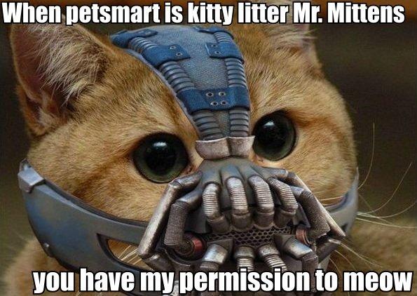"Bane Cat. . WHEN ""jsmart is ratter Mr, w dtad van have magners les to meow Bane Cat WHEN ""jsmart is ratter Mr w dtad van have magners les to meow"