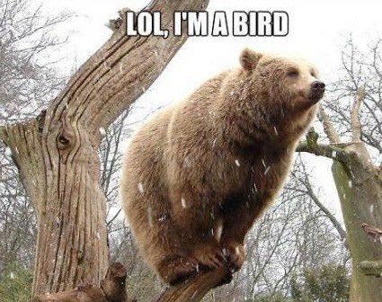 Bear or a bird?. Not OC.. Bird or a motherfucking Bear