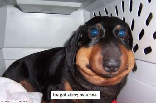 Bee sting. . Bee sting
