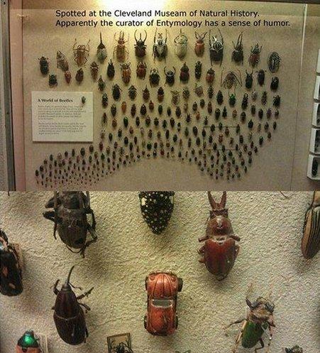 Beetles. .. <--- Explains the failure Beetles <--- Explains the failure