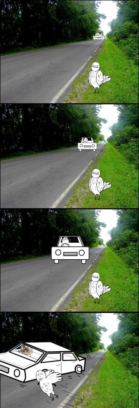 Bird logic. .. trololololo Bird logic trololololo