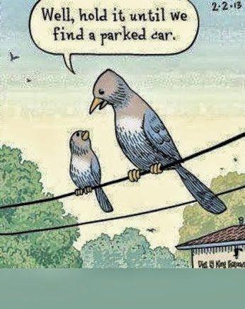 Bird Shit 2. Source: Imgur. Bird Shit 2 Source: Imgur