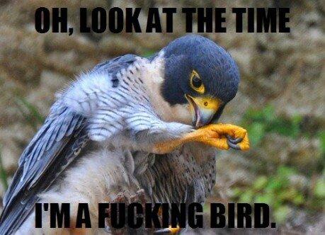 Bird. . Bird