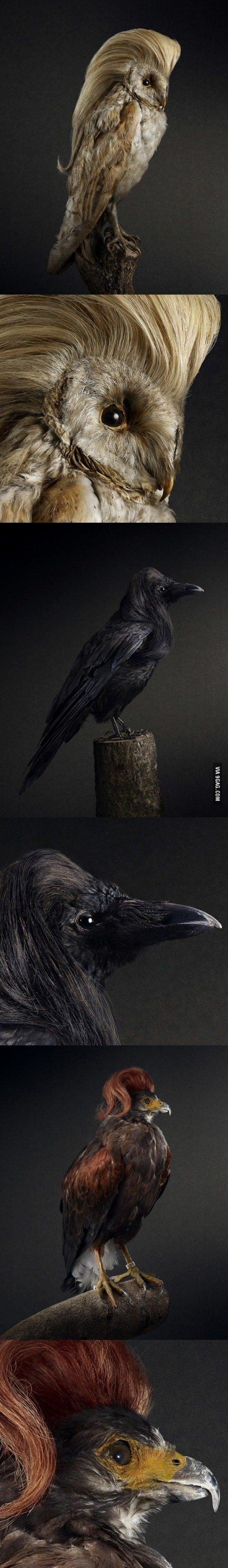 Birds with amazing hair.. . Birds with amazing hair