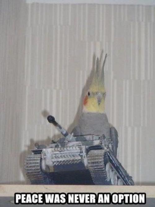 birds. . I in. whenever you spawn near Montezuma in civilization birds I in whenever you spawn near Montezuma civilization