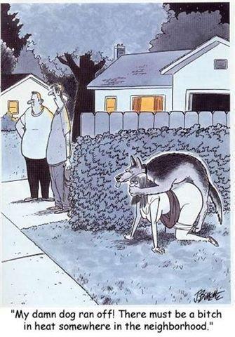 "bitch in heat. doggie, eh. B!] damn dog ran tatt There must be a bitch in heat '.' The neighborhood."" comic doggy"