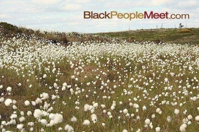 black people meet. cottonfield black people. niggers cottonfield slaves