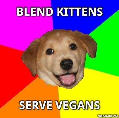 blend kittens. . BLEND KITTENS blend kittens BLEND KITTENS