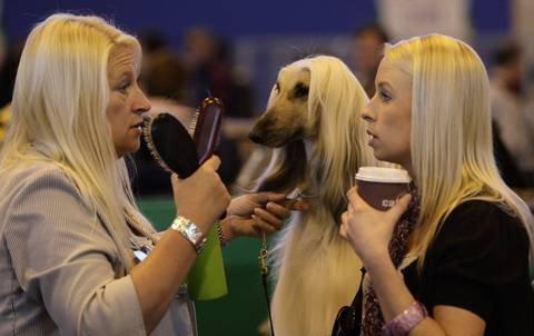 Blondies. .. Dammit Duchess! Get away from those skanks. Blondies Dammit Duchess! Get away from those skanks