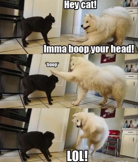 boop. . boop