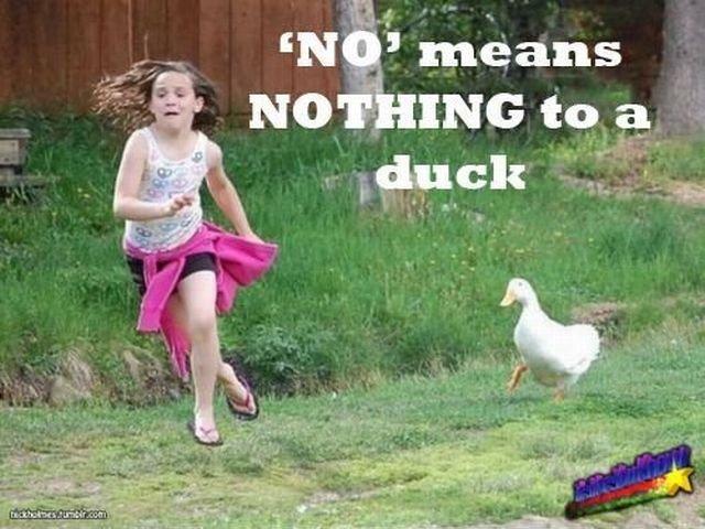 Bread crumb deficit. makes ducks go crazy. asdasdasdasd