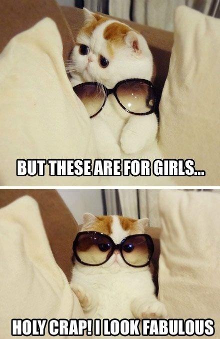 fabulous cat is fabulous. .. Well... he's not wrong cat Fabulous glasses Cute