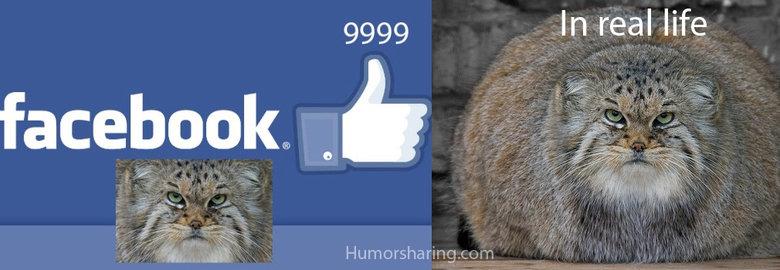 Facebook cat. Facebook cat in reality .. hi Cats facebook funny