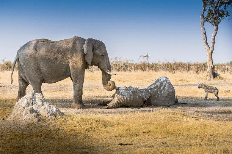 Farewell, my trunky friend. An elephant's farewell. Farewell my trunky friend An elephant's farewell