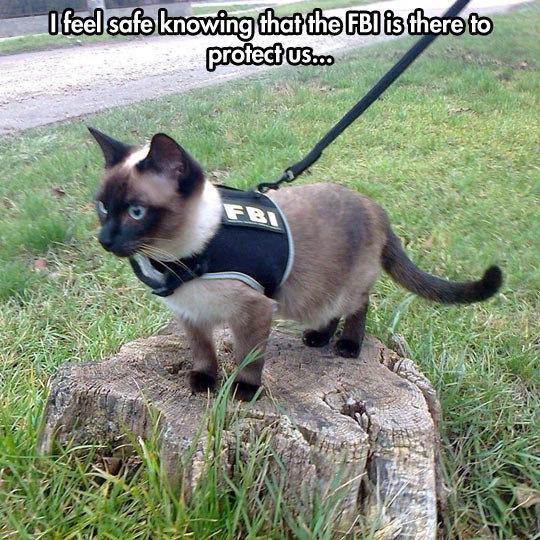 Feline Bureau Of Investigation. Feline Bureau Of Investigation geniusquotes.net/weird-personalities-best-frien.... l llooll l , _ aere tn}. Feline Bureau of Investigation funny