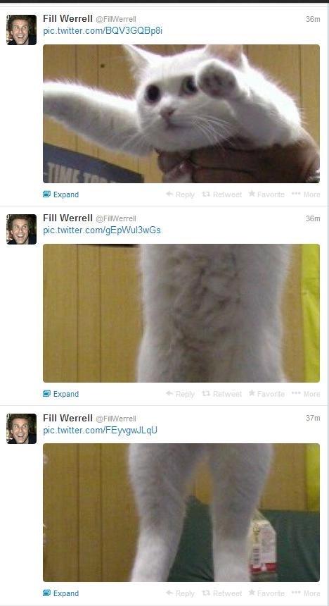 "Fill Werrel. . Fill Werrell Mella"" Emili m; Fill We mall ' Expand Fill Werrell Fill Werrel Cat"