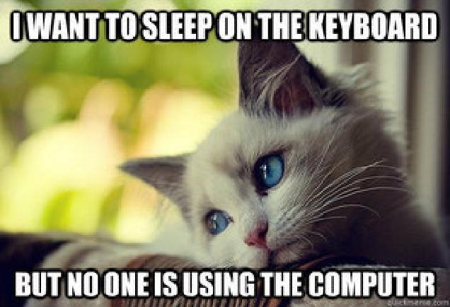 First World Problems Cat. Poor kitten. inn Ill First World Problems Cat Poor kitten inn Ill