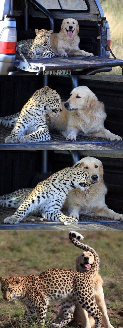 friends. friends. friends