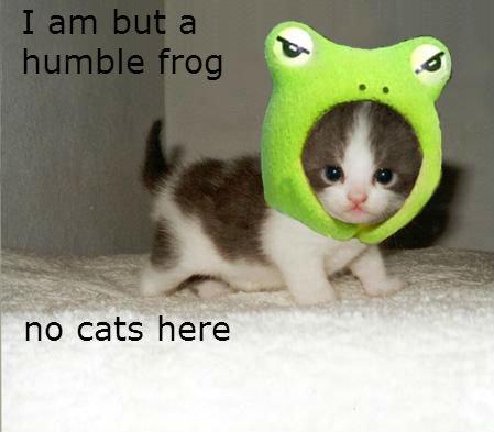 Frog. Definitely a frog... NYYYYEEEEEEAAAAS Frog disguise cat humble hidden