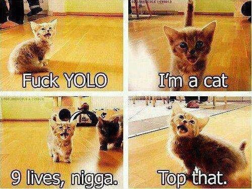 fuck YOLO. im a cat.. Bitch please fuck YOLO im a cat Bitch please