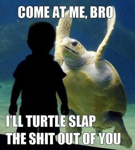 Fucking turtles man.... . Fucking turtles man