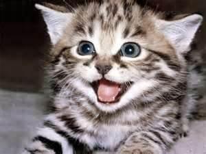 funny cat. funny cat. funny cat