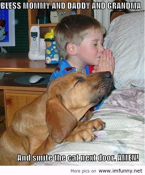 funny dog. . funny dog