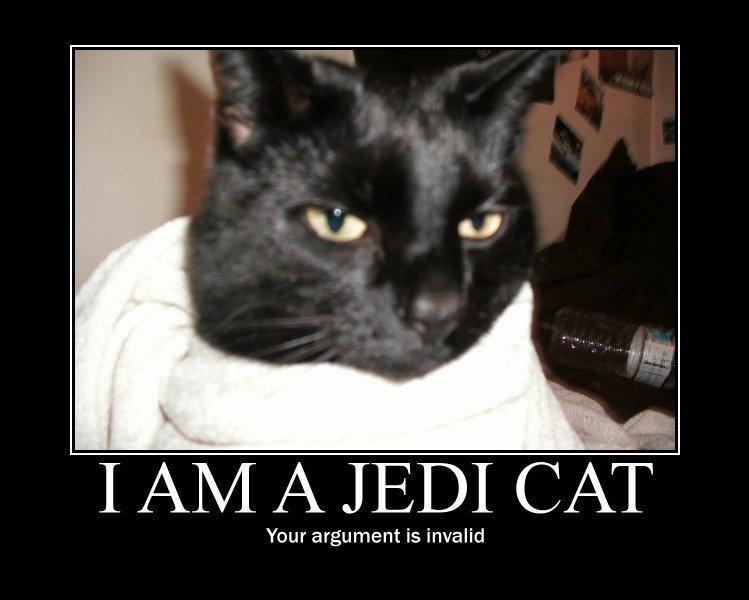 Jedi cat. OC. Jedi cat OC