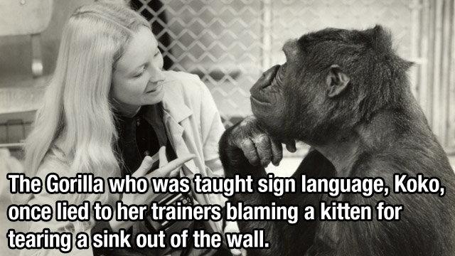 Jimmies were rustled.. I love it.. Gorilla kitty ffhdfhdh