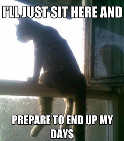 just a cat. . I ll ICIEST SIT artits Mill. Wut. just a cat I ll ICIEST SIT artits Mill Wut