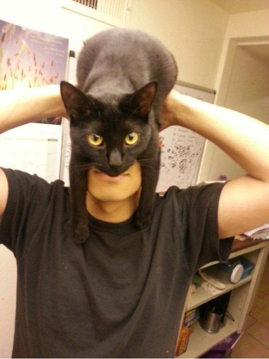 na na na na na na na na. CATMAN!.. How far in the newset uploads am i? hes real