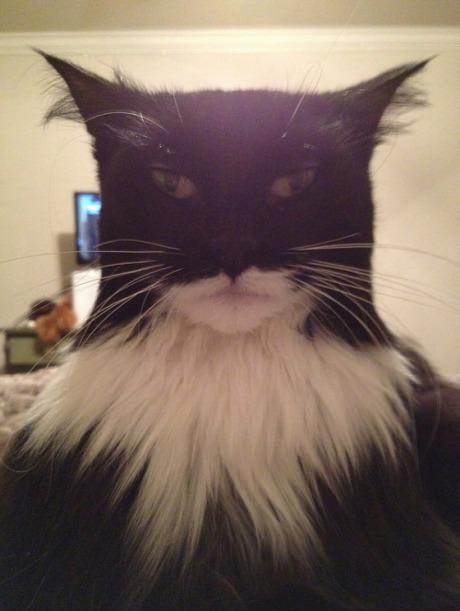 NANANANANANA CATMAN!. .. This is the cat Gotham deserves. NANANANANANA CATMAN! This is the cat Gotham deserves
