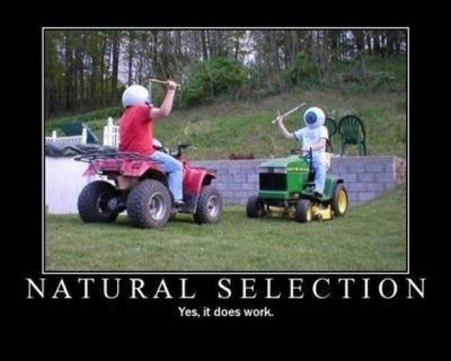 Natural selection. indeed, it work.. so ooooold... Damn natural Selection thanks darwin