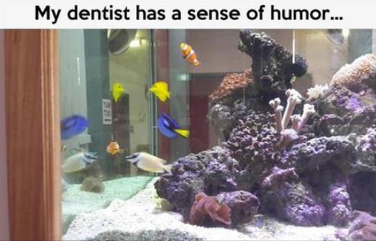Nemo. . Nemo