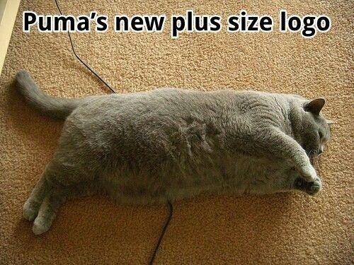New Puma Logo. .. You mean something like this? puma Logo FUNNYJUNK