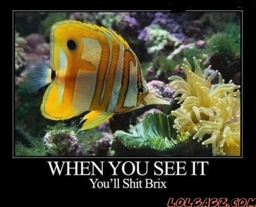 nifty!. re post? idk tags are kinda fishy...... my kind of fish kinda fishy
