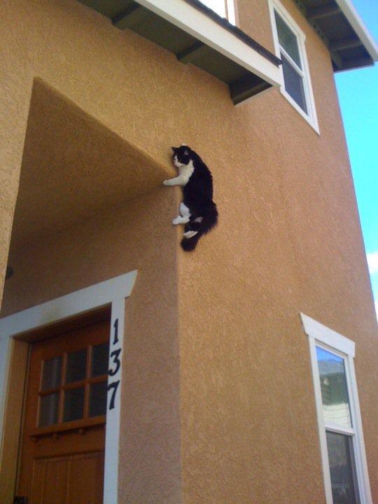 Ninja Cat Be Ninja. .. i give props to the cat Ninja Cat Be i give props to the cat