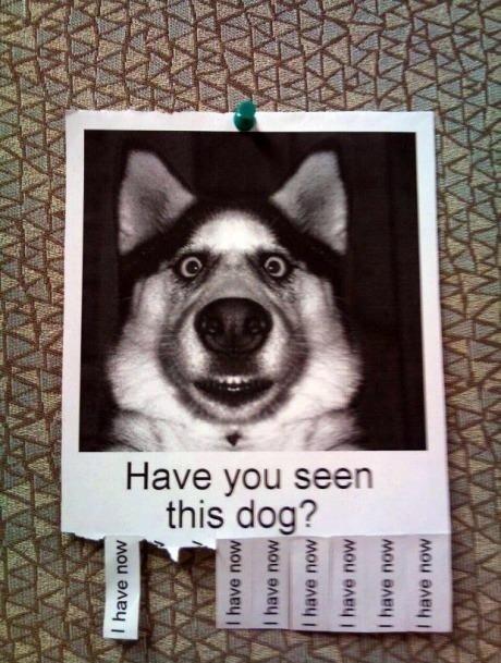 No... No I have't. Hi. Sam. win. Brother? Dog funny im really bored