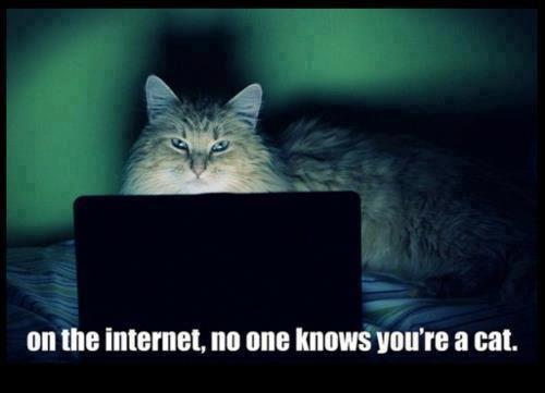 "Nobody knows..... Yes im a cat. NI ttwtt "", mo NIB UNITE cat. fars frashes"