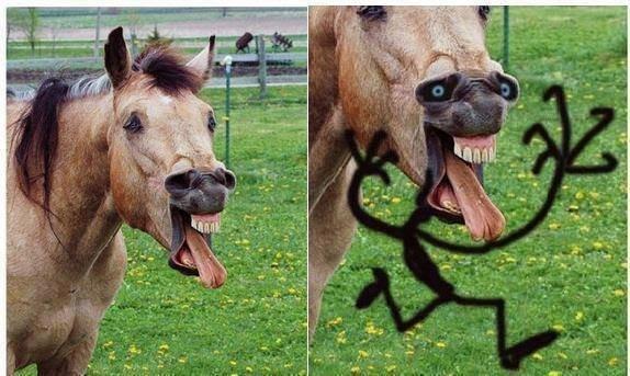 nope.. nope.. nope horse