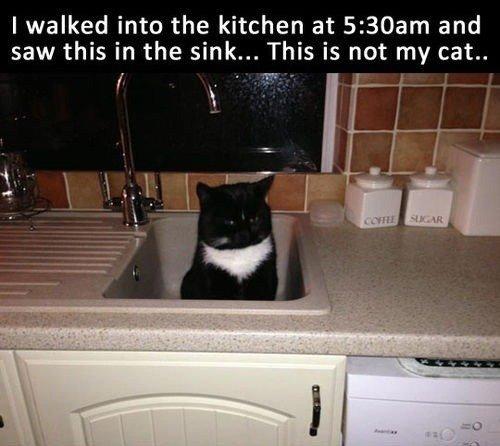 Not my cat..... . Not my cat