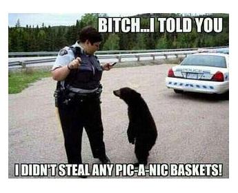 NOW LOOK HERE .... . Hun it Bears Cops baskets