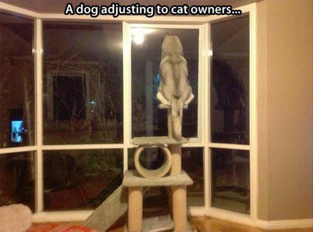 Nuff said.. .. Cat huskies are best huskies Nuff said Cat huskies are best