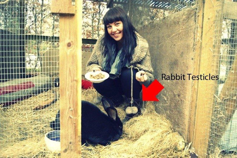 Rabbit Testicles. . Rabbit testicles