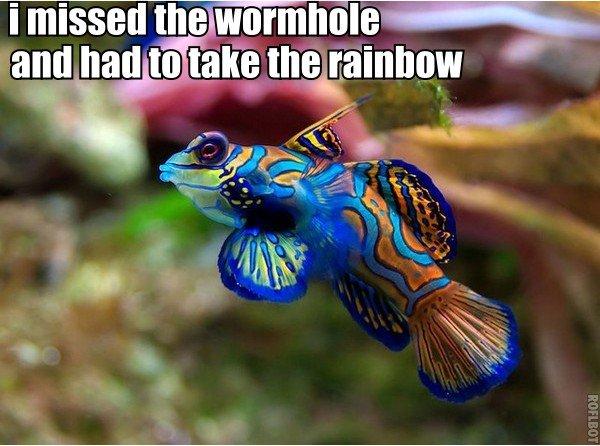 raiinbow fish. raiinbow fish. I missed the. beautiful fish! raiinbow fish
