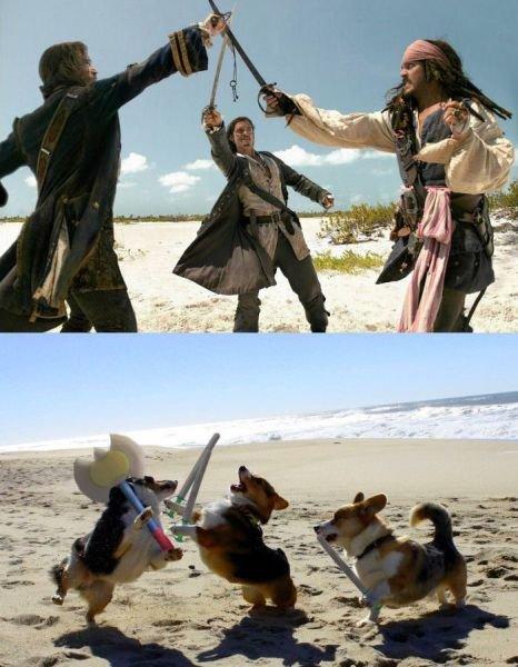 re-enacting pirates of the caribbean. .. I love corgis Dogs POC jack sparrow