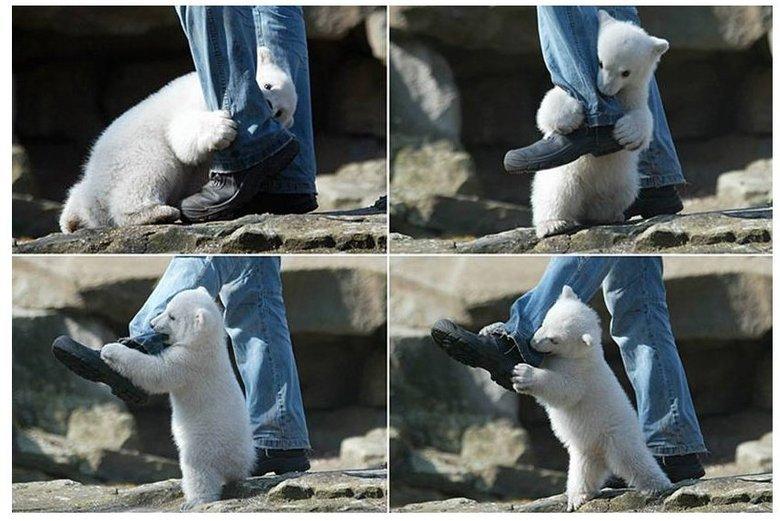Real polar bear attack in alaska. .. skittles heart att- HHHRRRRNNGGGGGG Real polar bear attack in alaska skittles heart att- HHHRRRRNNGGGGGG